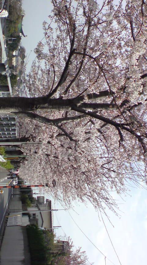 桜☆桜☆桜