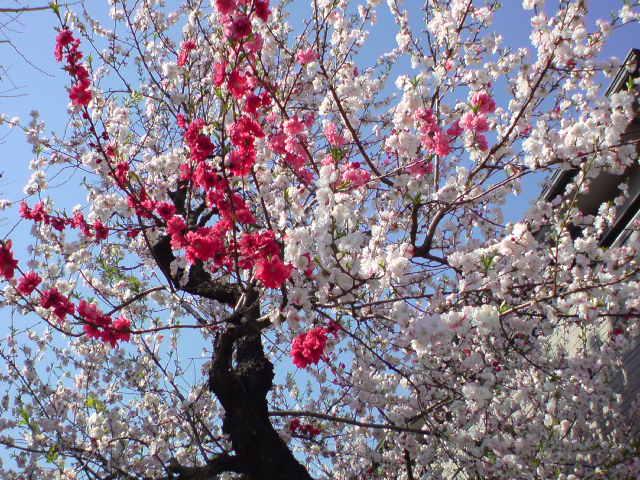 春のお散歩♪